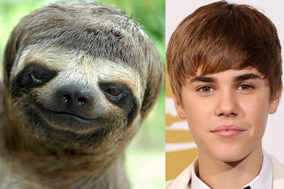 Nature's cutest Bieberlikes!