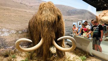 A new biosciences and genetics company, Colossal, has raised A$20 million to bring back the woolly mammoth from extinction.