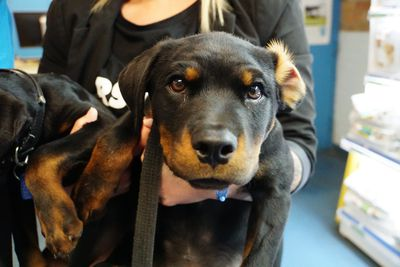 """RSPCA is bringing back its annual """"Clear The Shelters"""" pet drive, which reduces adoption fees for pets to a maximum of $29 (Matt Coble)."""
