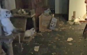 Pet breeder avoids jail after 118 cats found in squalor