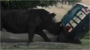 A safari park employee has had a lucky escape after a Rhino rammed their car.