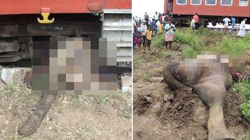 Elephants killed by train in Sri Lanka.