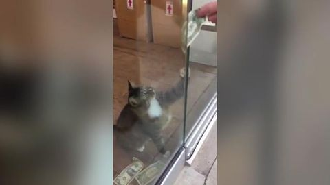 Money-hungry office cat sparks homeless donation drive