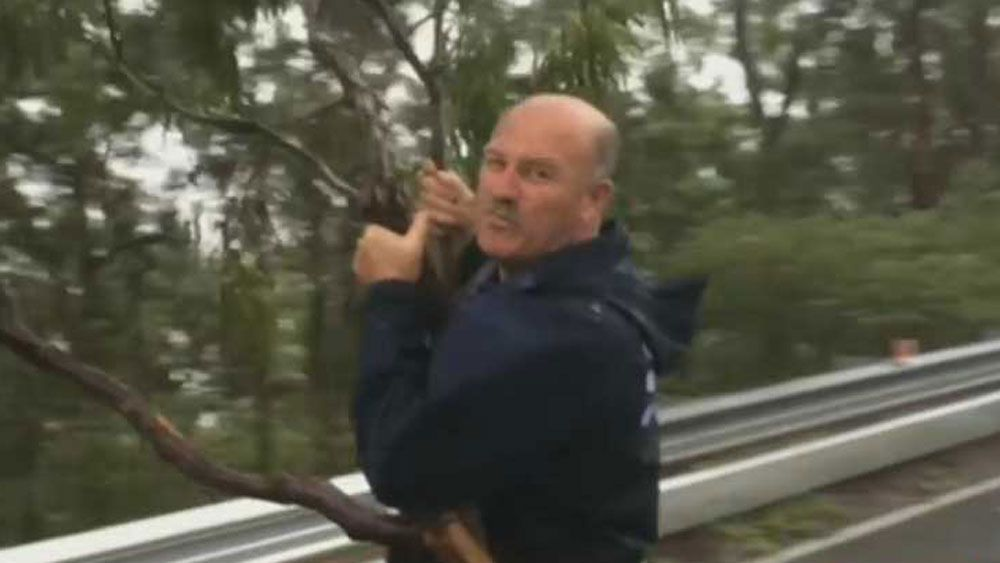 Channel Nine's Wally Lewis helps clean up after wild storms lash Brisbane