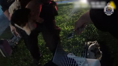 Several fluffy fire escapees can be seen being cared for by the officers after the daring rescue.