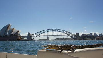 Australia's population is set to reach 24 million next week.