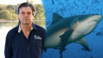 A Queensland shark expert has revealed the most common species involved in shark attacks