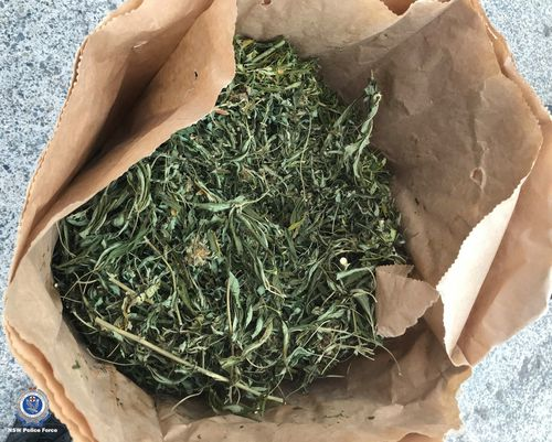 Hundreds of cannabis plants and more than 20 kilograms of cannabis leaf were confiscated during searches on the NSW Coffs Coast.