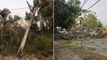 The storm felled powerlines and trees across Sydney.