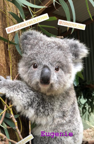 This is the adorable baby koala named after Eugenie.