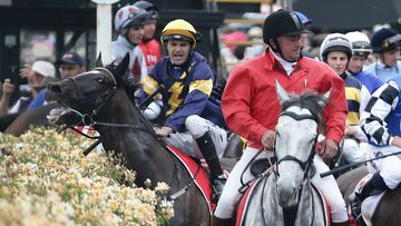 Melbourne Cup runner Araldo reacts to a flag being waved near the rose garden. (AAP)