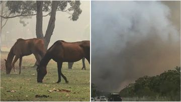Locals in the Bushells Ridge area of the NSW Central Coast have been warned to prepare to leave as a bushfire burns close to the M1 Motorway.