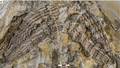 150-million-year-old shark fossil unearthed in Germany