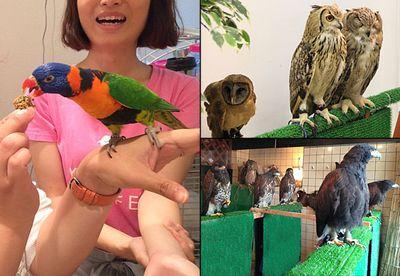 Bird cafes
