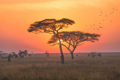 20. Tanzania