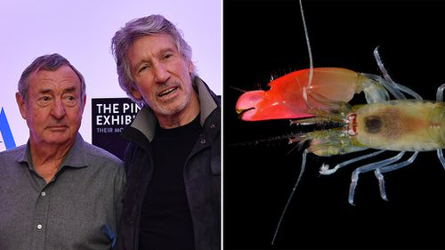 New sonic blast shrimp named after English rock band Pink Floyd
