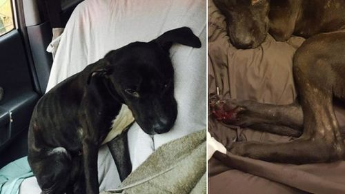 New York woman finds abandoned dog whose paws were frozen to the ground