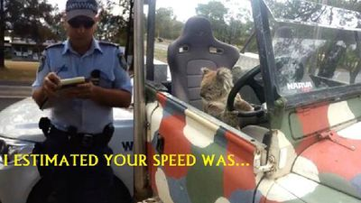 Lucky for the koala, police were not on hand to 'estimate' his speed as they had allegedly done with a human driver recently.