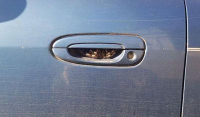 Car door surprise
