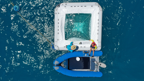Great Barrier Reef Foundation researchers check on larval pools.
