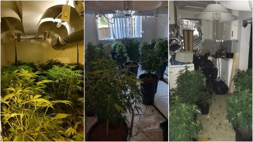 Police seize $2 million worth of cannabis across Sydney's north-west