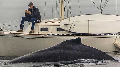 Man glued to phone misses rare whale sighting
