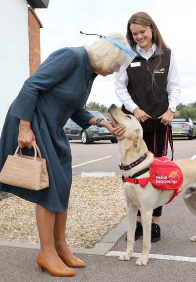 Camilla, Duchess of Cornwall, Patron of Medical Detection Dogs, meets Storm, a Labrador Cross Golden Retriever, during a visit to the charity's training centre where trials are currently underway to determine whether dogs can act as a diagnostic tool of COVID-19 on September 09, 2020 in Milton Keynes, England.