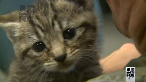 The kittens were called in by a man who found them abandoned in a box. (Q13 Fox News)