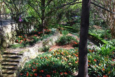 <strong>Swain Gardens,Killara</strong>