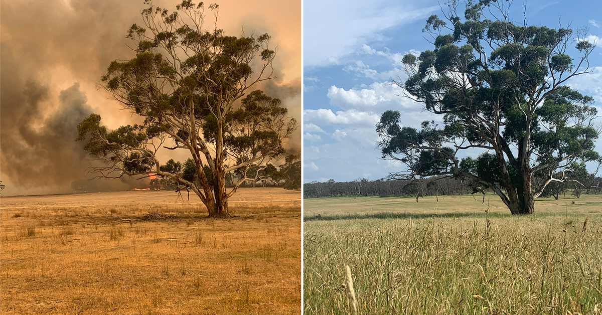 Before and after: One year since horrific Black Summer bushfires – 9News