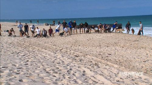 The West Coast Eagles put their pooches to the test to see who could be 'top dog'. (9NEWS)