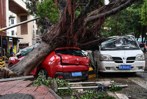 Cars crushed by trees uprooted by strong winds on a road in Guangzhou city, southern China.