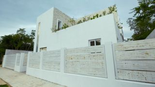 Finding Their Roots in Tulum