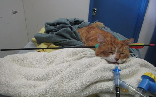 The cat is recovering well. (9NEWS)