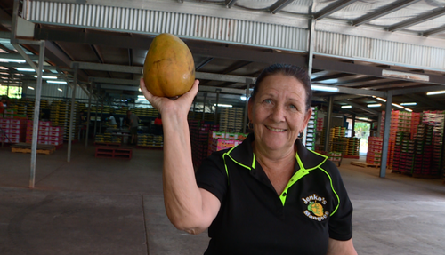 Karen Jenkins was sorting through the crops when she found the mega mango, too big to send out to supermarkets.