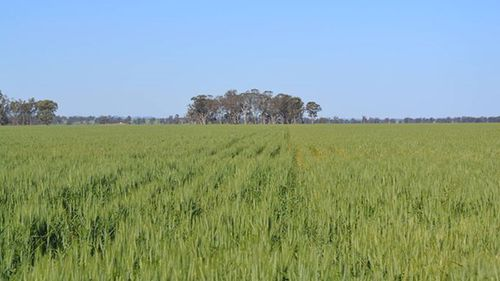 The land once sustained wheat, cotton and canola crops.