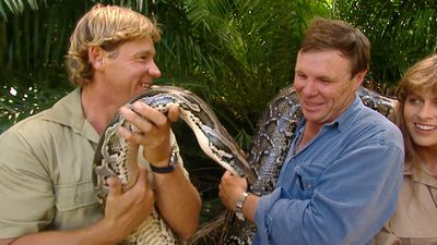 'He's Australia's most venomous snake but isn't he pretty?'