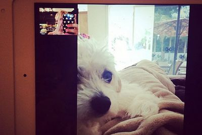 @normancook: Emmy morning FaceTime w the Rubes!!!! @peteyleo