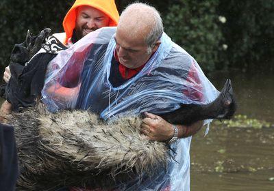 Emu rescue