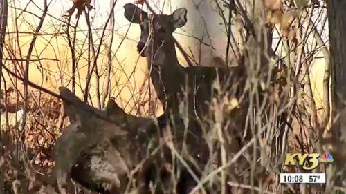 Thomas Alexander hunter killed after shooting deer in Arkansas US 3