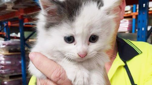 One of the rescued kittens. (Mark Simper)