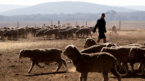 "A farmer from rural Queensland says he has been forced to work ""for free"" amid worsening drought conditions that have forced him to dramatically cull his livestock."