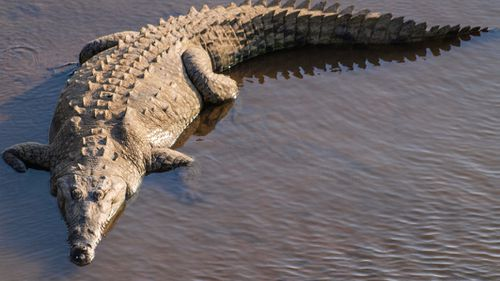 An American crocodile attacked the teen.