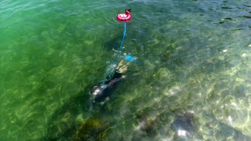 That compressor, which is attached to a red float, draws air from the surface outside and pumps it through a blue hose which the diver breathes through. (9NEWS)