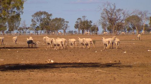 Much of the state's landscape has been left barren and dry by months of no rainfall. Picture: 9NEWS.
