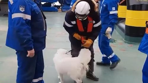 Экипаж российского ледокола «Самоед» вошел в глубь ледяных полей у поселка Мыши-Камены на севере России.