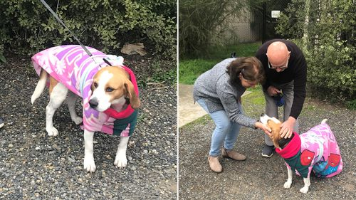 Millie the stolen beagle reunited with elderly owner