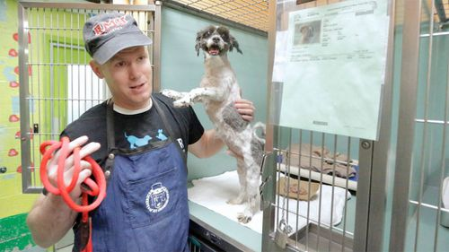 Groomer changes the lives of neglected dogs with free haircuts