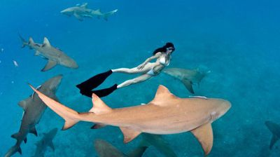 """Ms Rochat, who has been swimming with sharks for 15 years, even went as far as to describe the shoot as """"extreme""""."""