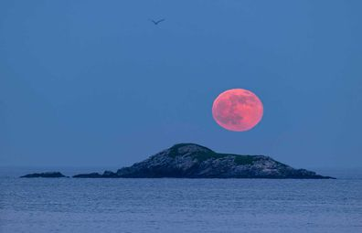 The Strawberry Moon, rising above Egg Rock bird sanctuary in Nahant Bay near Boston.